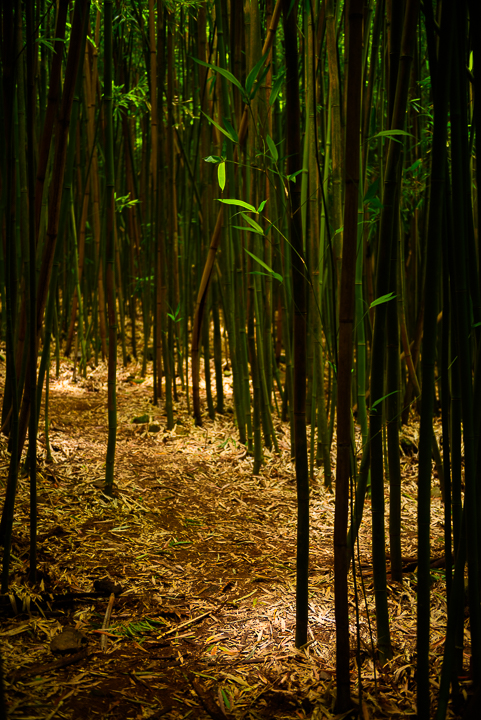 Light Play in Bamboo Forest