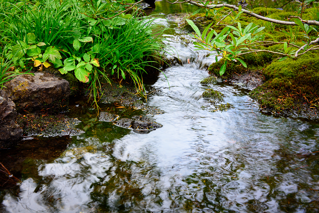 Little Streams