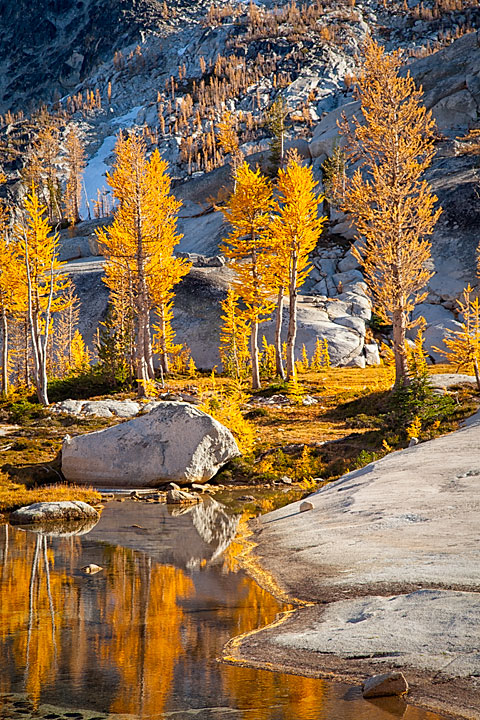 Larches and Reflections